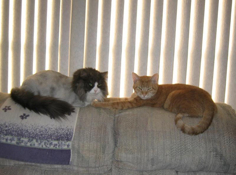Rocky & Turbo
